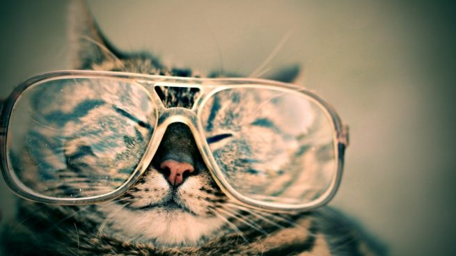 Cómo saber si tu gato ve bien o tiene problemas de visión