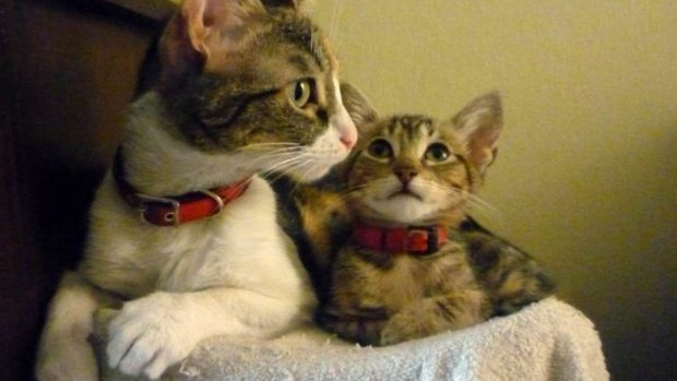 Sociabilidad en el gato