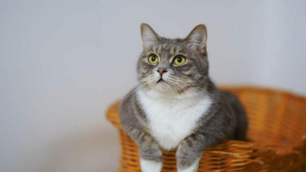 Anticonceptivos gato