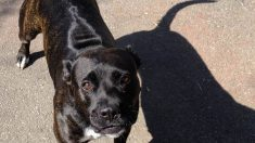 Obsesión de perro por sombras