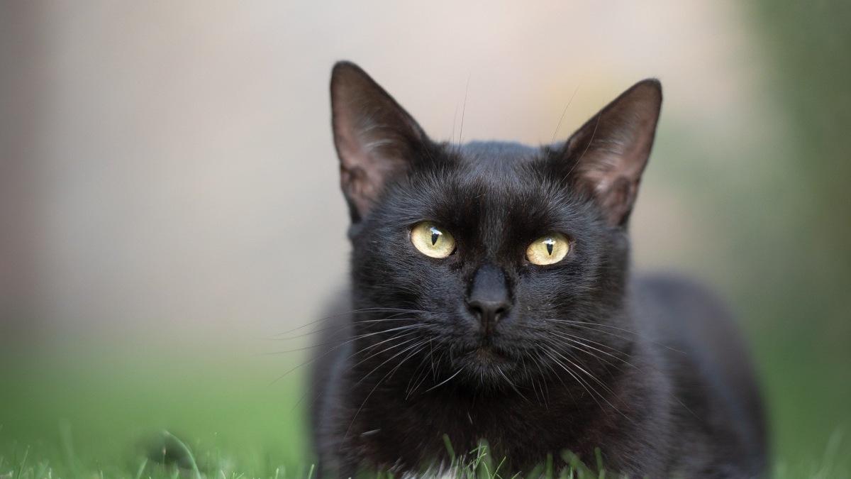 El Ayuntamiento de Ventas dice ahora que desconoce si el felino que busca es una pantera