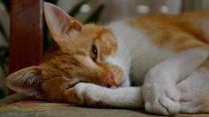 Intoxicación alimentaria en mascotas