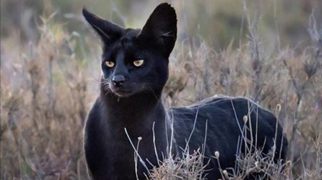 Un pueblo de Granada bromea sobre la famosa pantera negra desaparecida