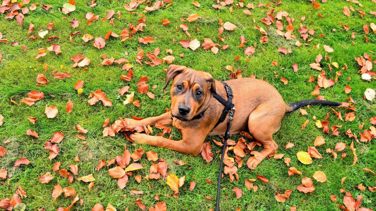 Paseo del perro con correa
