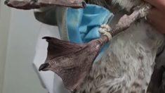 Facebook: Una gaviota a punto de perder una pata por culpa de una mascarilla