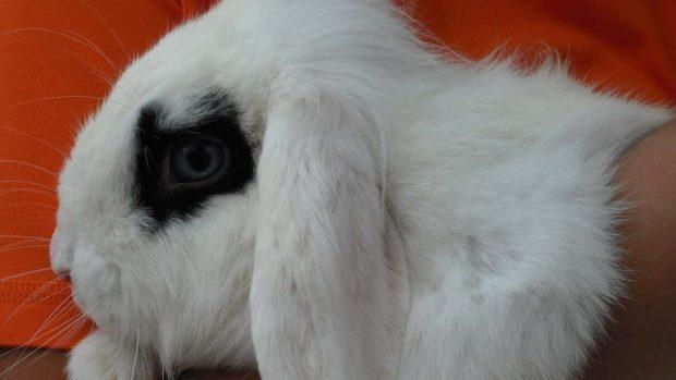 Conejo encima