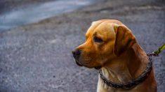 Evita que tu perro muerda la correa