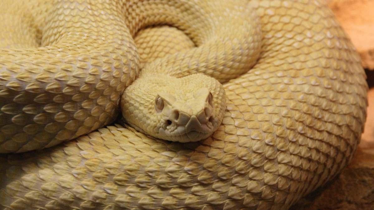 Una serpiente en casa como mascota