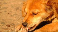 Ofrece carne cruda a tu mascota