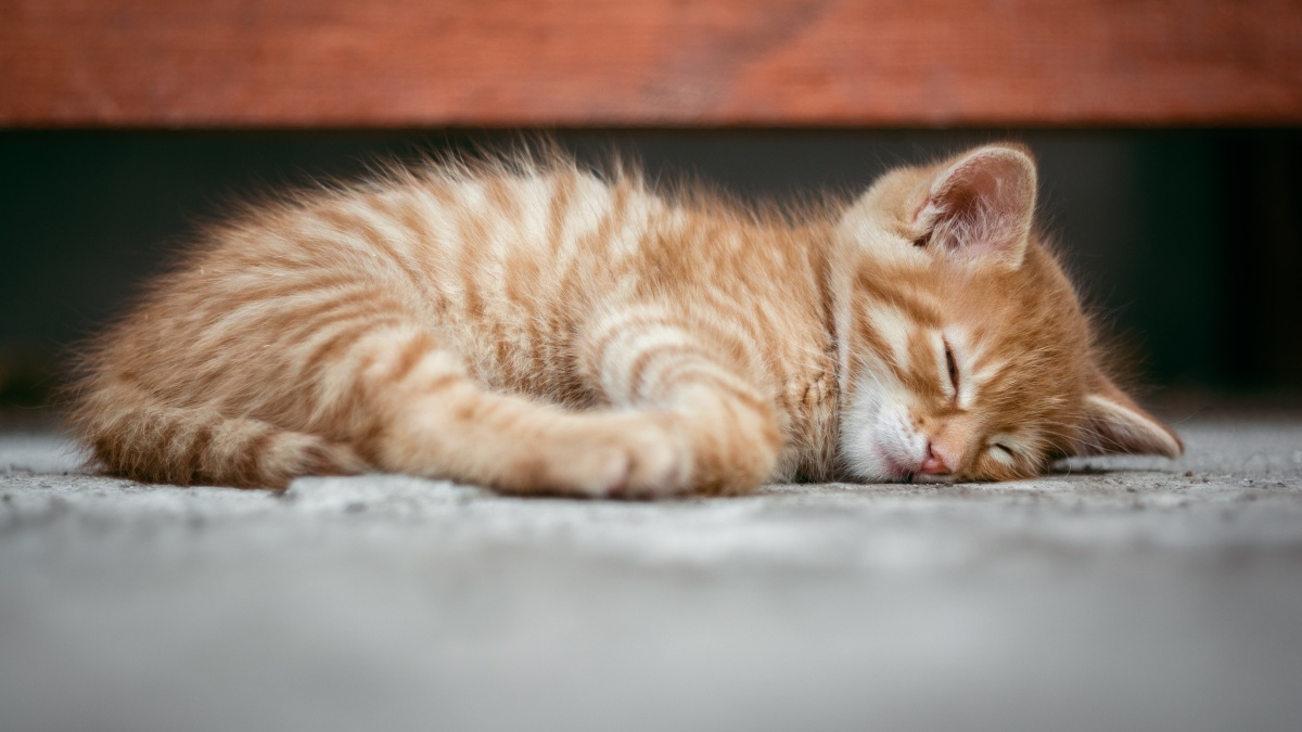 Facebook: Desahucian a un hombre que vivía con 96 gatos en un piso de Gandía
