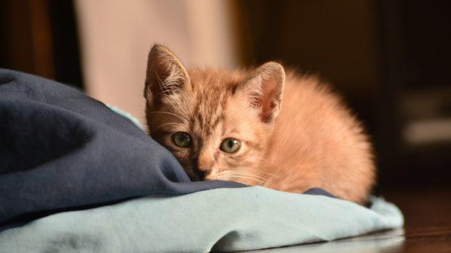 Costo de tener un gato en casa