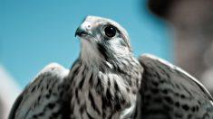 Aves solitarias