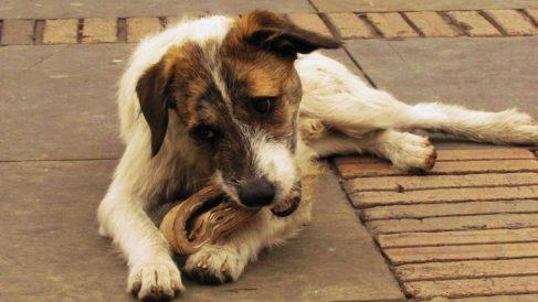 Cómo evitar que tu perro coma cartón