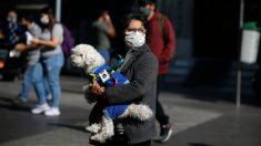 Perros rastreadores contra coronavirus