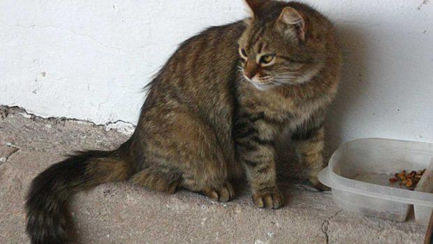 Lesión gato en su cola