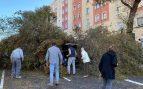 Un árbol sepulta a un coche con su conductor dentro en el centro de Madrid