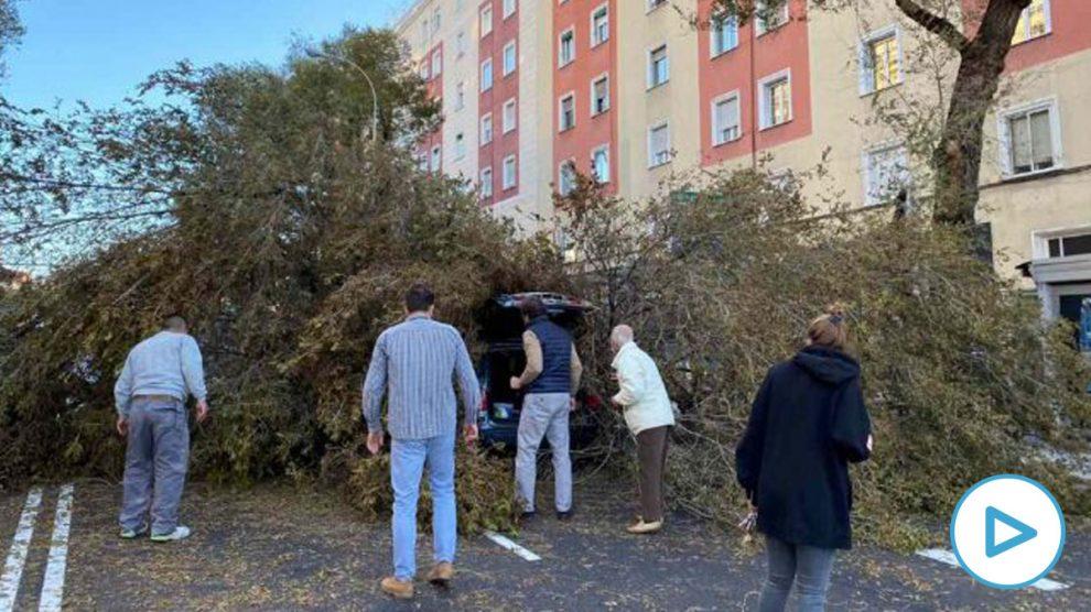Lugar donde un árbol ha caído encima de un coche por las fuertes rachas de viento