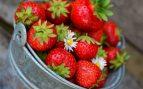 La provincia de Huelva pone en marcha la recolecta de fresas con la necesidad de contratación de personal