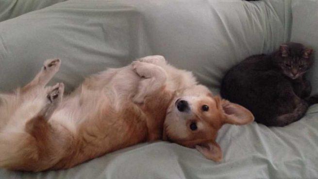 Perro en sofá