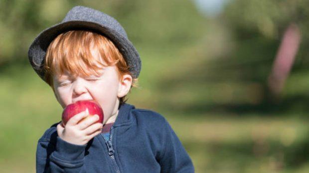 Alimentos de otoño que son un concentrado de salud para los niños