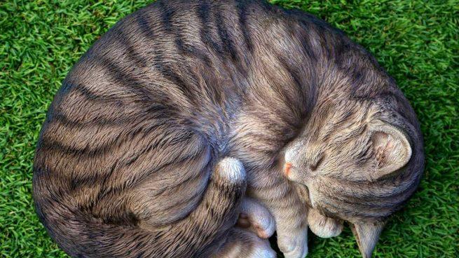Enfermedades zoonóticas en mascotas