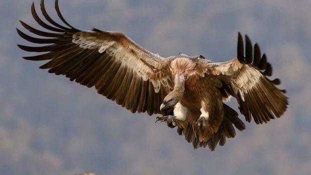 Aves vuelan alto