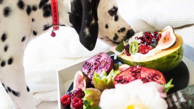 Humedad comida perro