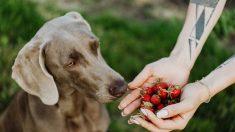 Humedad para la comida de tu perro