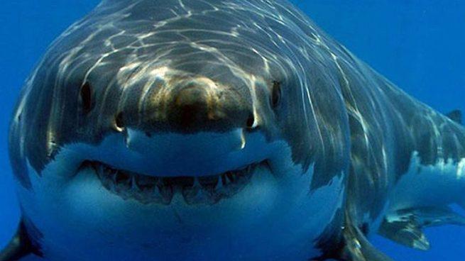 Por qué están los tiburones en peligro por la vacuna del coronavirus