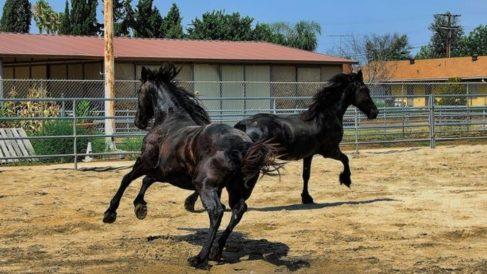 32 caballos contagiados en la provincia de Cádiz