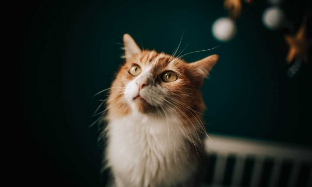 Cosas curiosas del gato