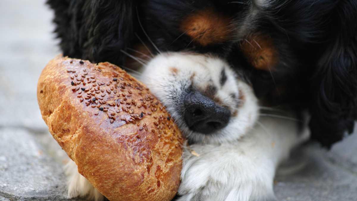 Perros, alimentos a evitar