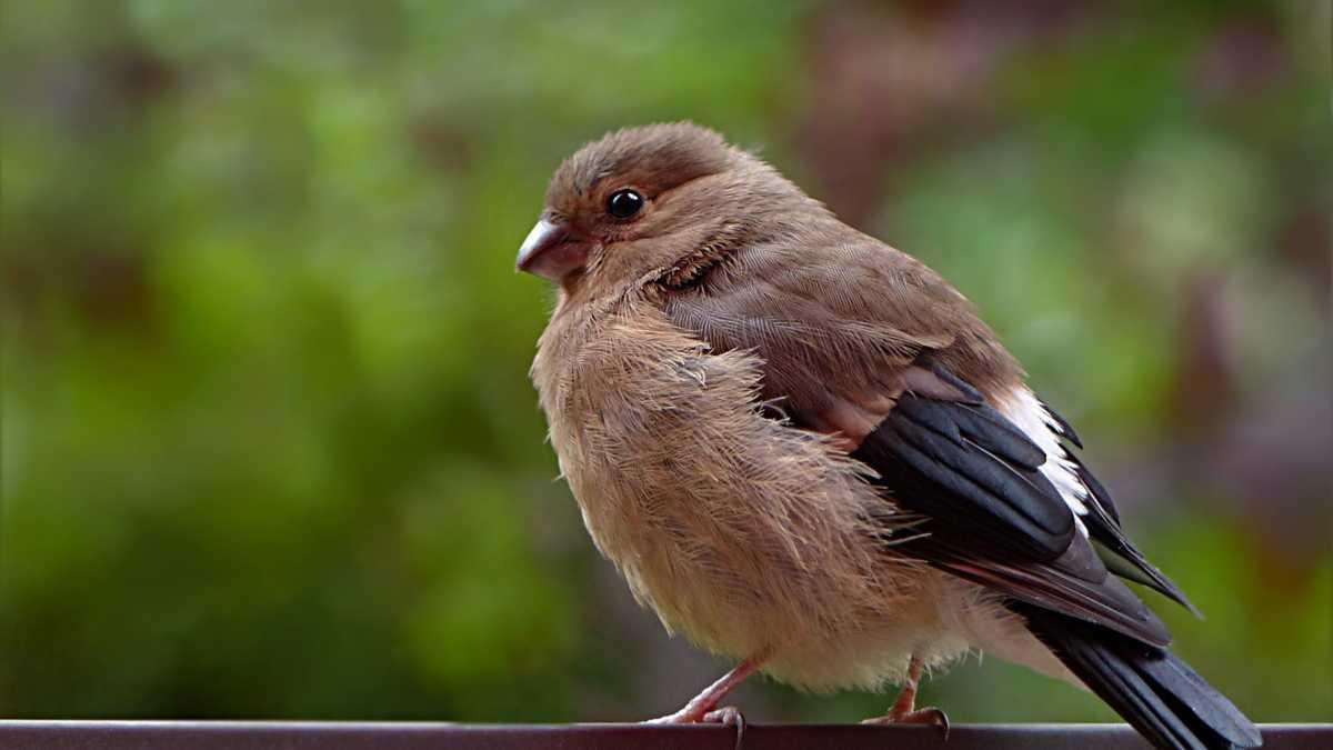 Crea un jardín de invierno para pájaros