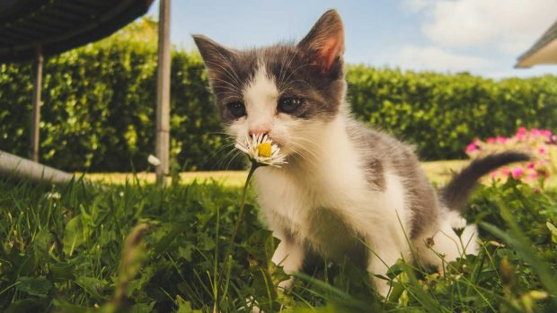 Gato huele flor