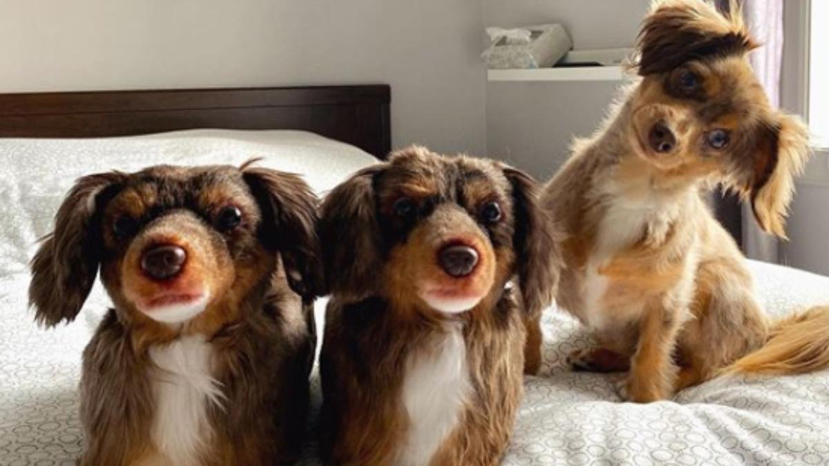 Instagram: Una empresa copia a tu mascota para convertirla en zapatillas