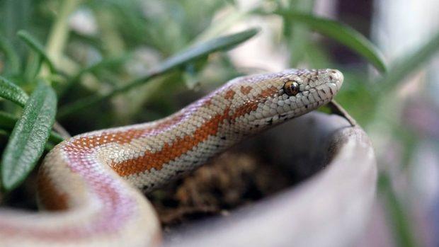 Enfermedades en tu serpiente