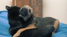 Día Mundial de los Animales, ¿cuáles son los beneficios de tener una mascota?