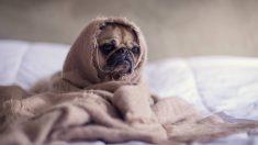 Pánico en tu perro