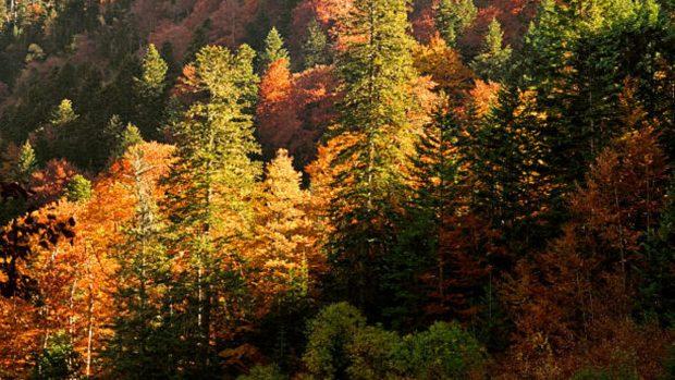 parajes norte españa otoño