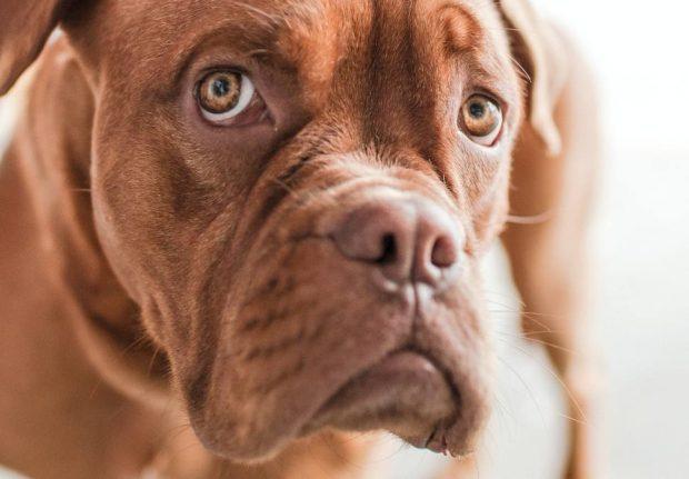 Problemas neurológicos en tu perro