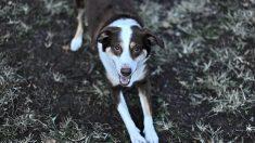 Patologías neurológicas en perro