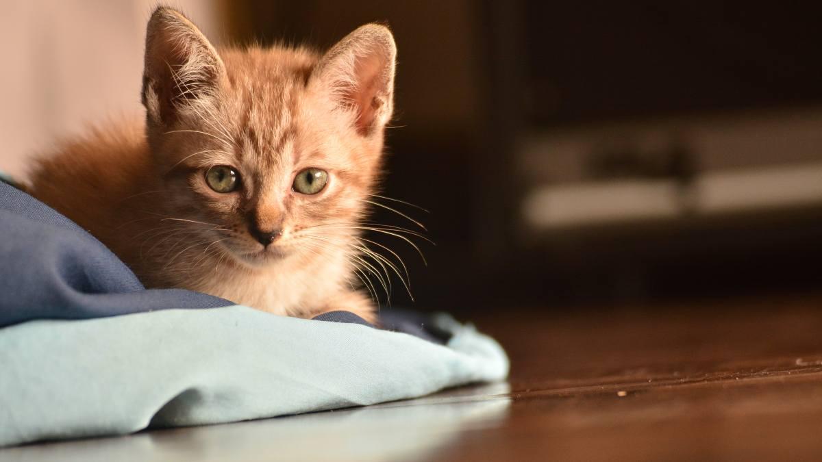 Síntomas de estreñimiento en tu gato