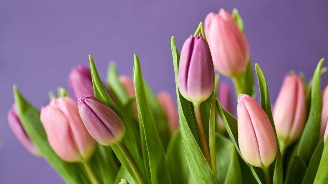 Cómo decorar con plantas de interior con flores