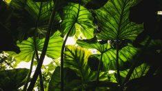Las hojas suelen ensuciarse con facilidad