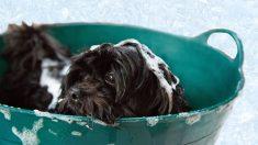 Productos naturales para el baño del perro