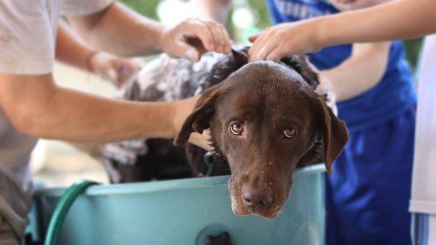 Baño de tu perro en casa