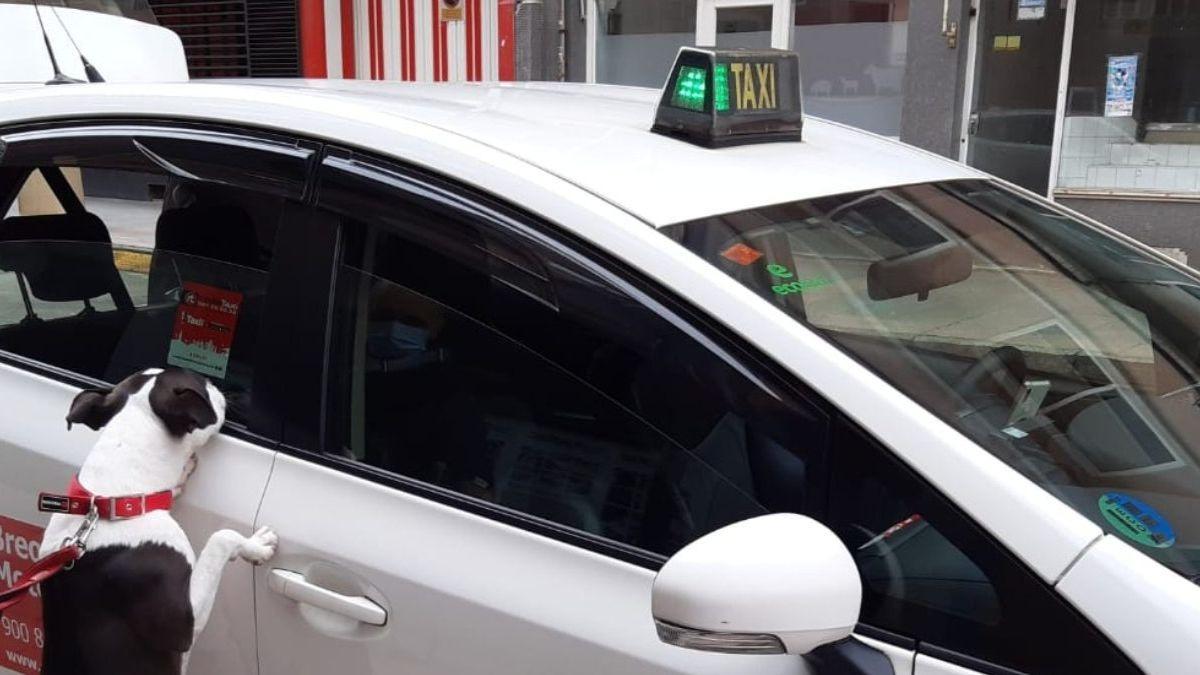 Taxi Guau