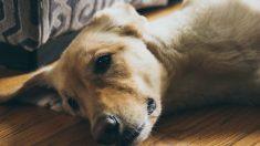 Enfermedad espinal en tu mascota