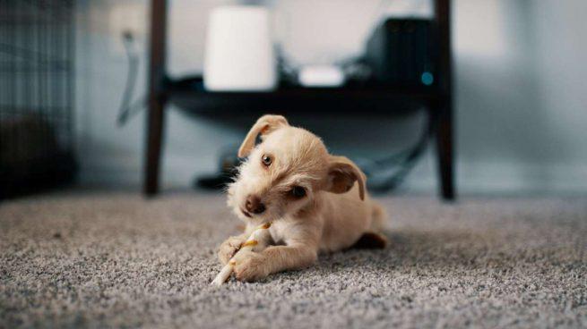 quitar el mal olor de las alfombras