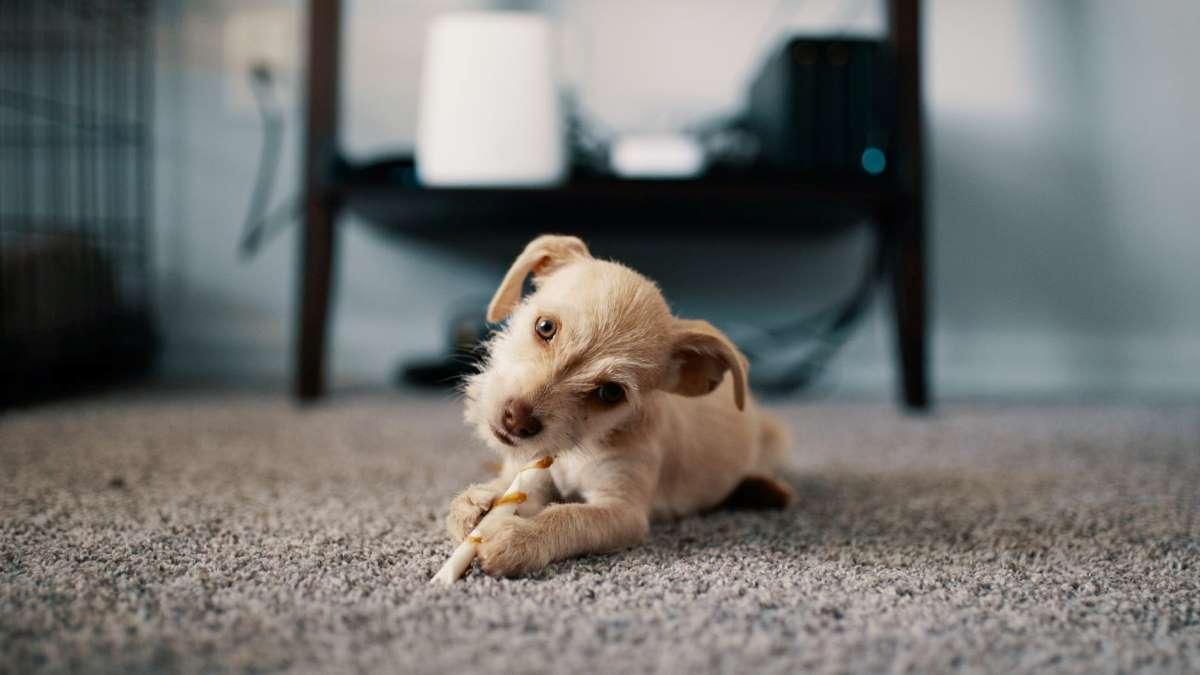 Las alfombras pueden acumular suciedad y olores si no las limpias con frecuencia